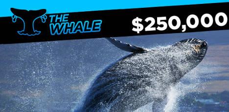888poker whale